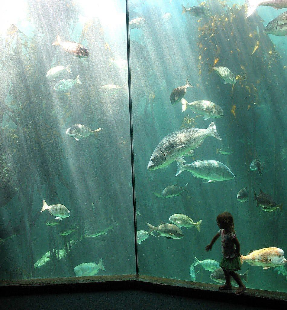 sapma - two oceans aquarium