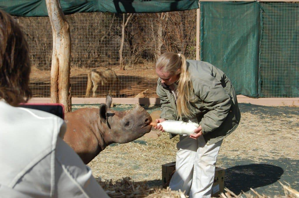 Media and sponsors watch in awe as a rescued rhino is fed milk from a bottle at the opening of the first rhino orphanage in South Africa 1