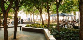 Alice Lane 3 contributes 'green lung' in the heart of Sandton
